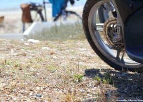Giovani plantule di Calendula maritima minacciate dal calpestio dei motorini