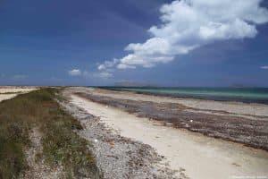 Vegetazione costiera sull'Isola Lunga