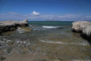 Depositi di Posidonia oceanica sull' Isola Lunga