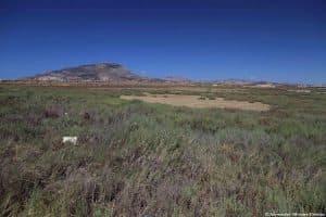 Vegetazione alofita al margine della Salina Calcara