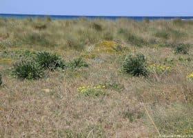 Ambiente retrodunale nella spiaggia di Cavallino bianco