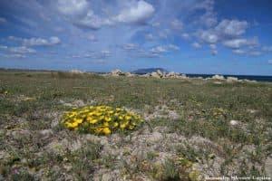 Vegetazione costiera presso Calazza, sull'isola di Favignana