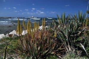Macchia di Aloe all'interno del Villino Nasi