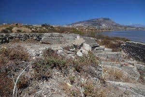 Piante di Calendula maritima sui ruderi bellici ai mergini della Salina Zavorra