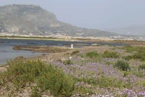 Vegetazione costiera sull'Isola Calcara