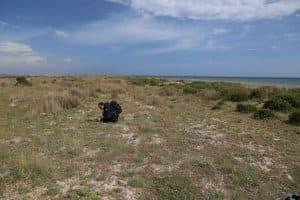 Rilevamento della vegetazione a Capo Feto