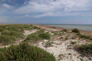 Vegetazione dunale a Capo Feto