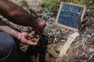 Profilo del suolo nel sito di Isola Lunga