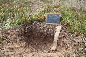 Profilo del suolo sull'Isola della Colombaia