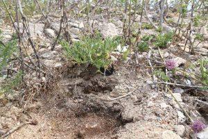 Profilo del suolo sull'isolotto di Maraone